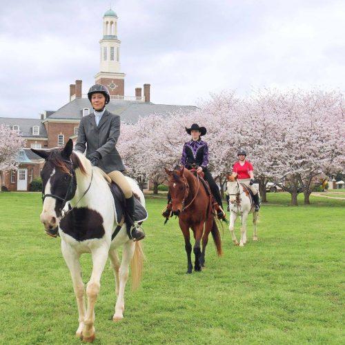Judson Horses