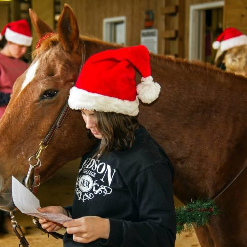 Judson horse decorated reins for Christmas