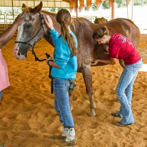 Horse getting it's pulse checked by students